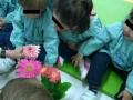 Primavera 13